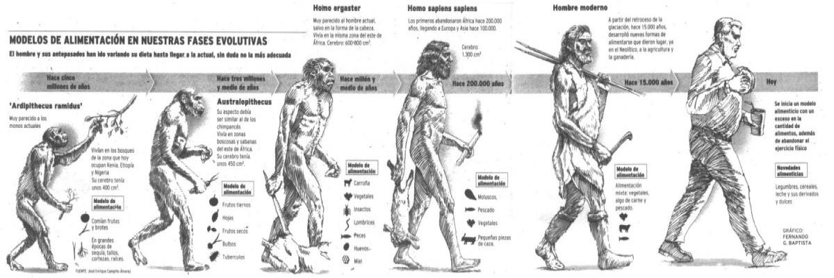 Cambios en la dieta de los hominidos